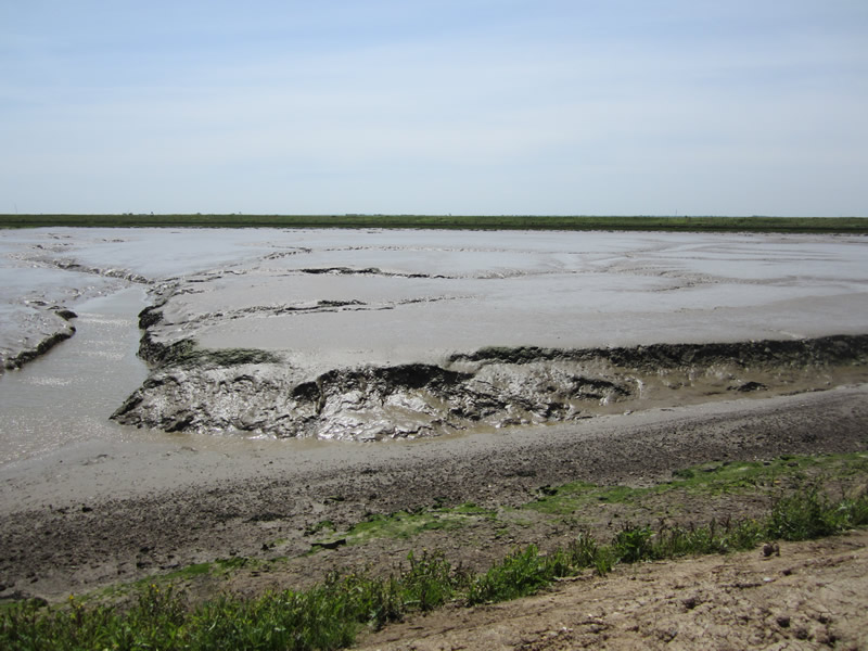 The Mudflats Returning to Wallasea